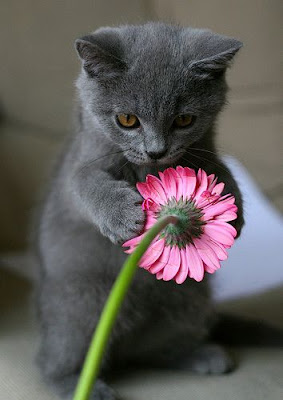 Funny Picture of Cat
