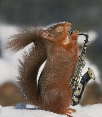 Animals Cute Funny Pics