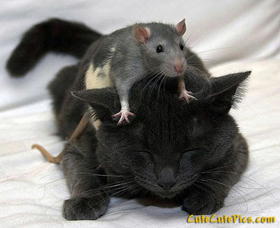 Cute Mouse and Cat Photo