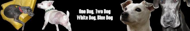 One Dog, Two Dog, White Dog, Blue Dog