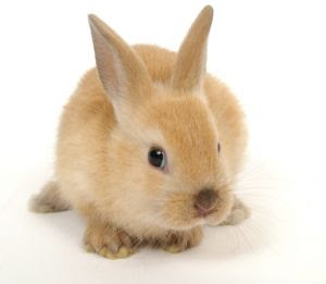 This is a cute little bunny...I'm the dumb bunny!