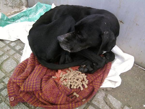 Frio y perro cuidar de tu perro es - Es malo banar mucho a los perros ...