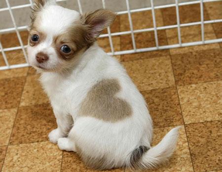 [dog.puppyheart.jpg]