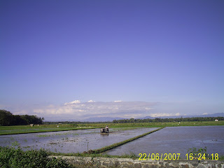 foto sawah di purworejo