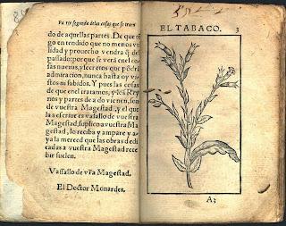 Ilustración de la planta del tabaco en la obra 'Historia medicinal de las cosas que se traen de nuestras Indias Occidentales', de Nicolás Monardes.