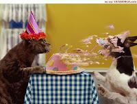 onar di hari ulang tahun