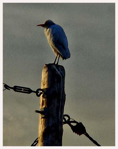Fascinado por las aves