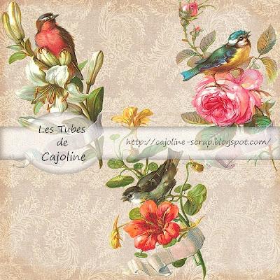 http://cajoline-scrap.blogspot.com/2009/10/freebie-3tubes-psp-vintage-oiseaux.html