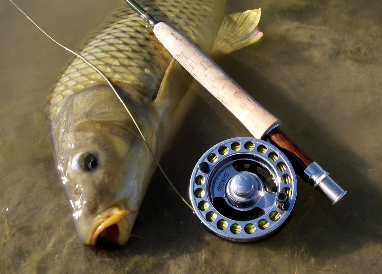 Colorado Fly Fishing Reports: Carp Gear
