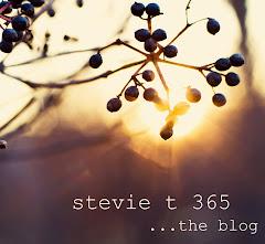 Stevie T 365 Blog
