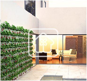 Natural corner cultivar o comprar - Pequeno huerto en casa ...