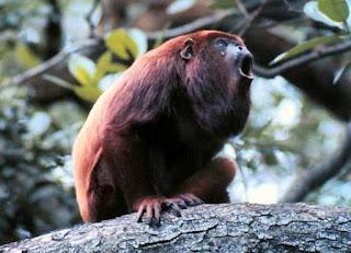 http://www.opoae.com/2013/03/hewan-hewan-dengan-suara-paling-keras.html