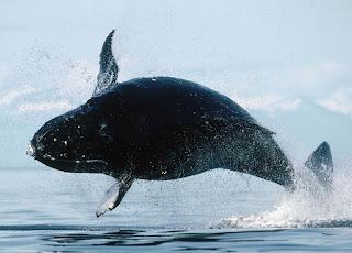 Binatang yang Bersuara Paling Keras di Dunia