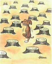 Dónde están los bosques?