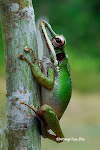 My Amphibians of Borneo