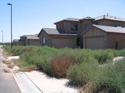 tumbleweeds takeover Stratland Estates, a development in Gilbert, AZ