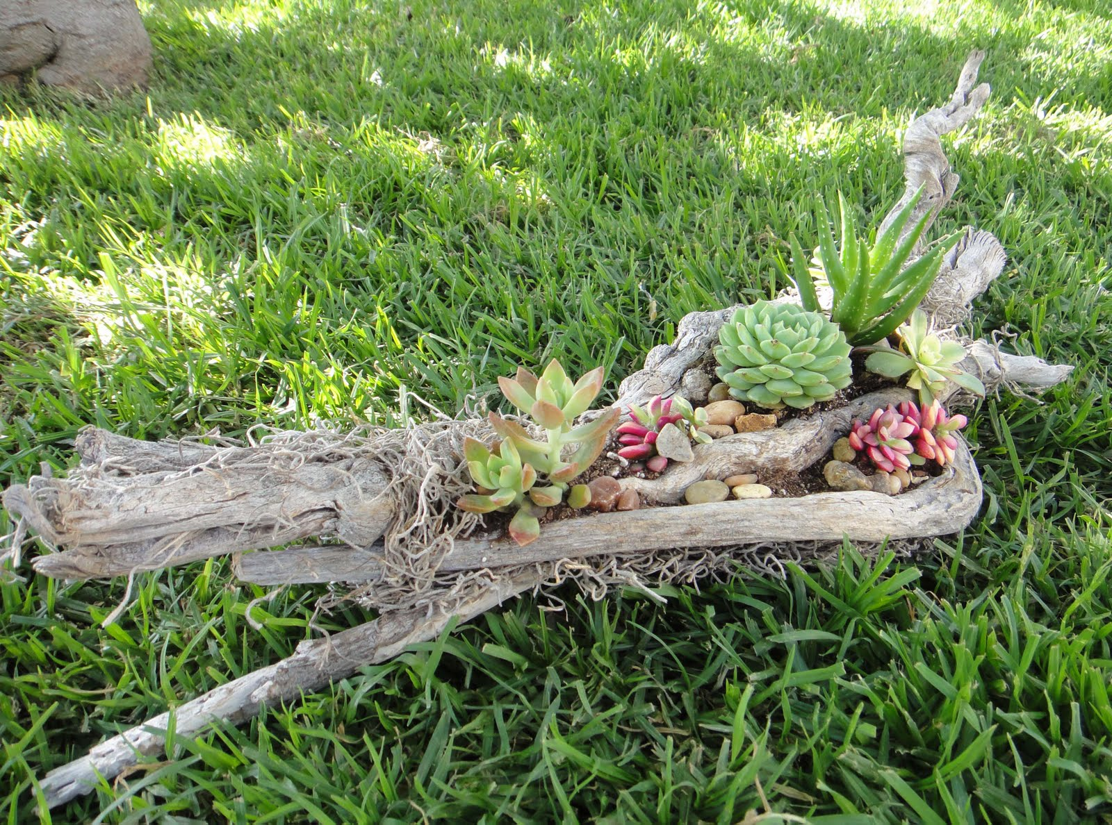 K8 vision driftwood succulent arrangement for Jardin 7 colores