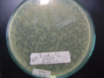 práctica con bacteriofagos