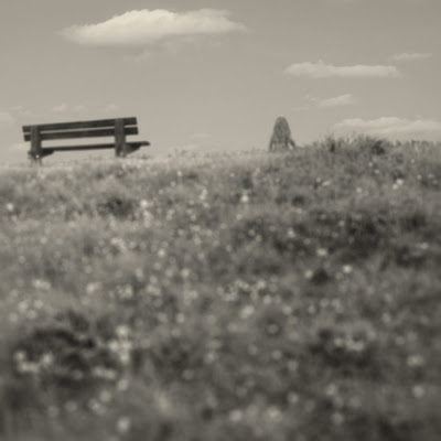 Buttercup Hill. Photograph by Tim Irving