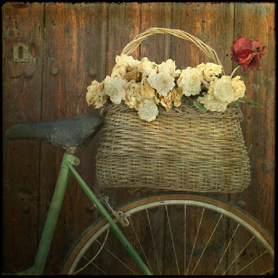 The gardeners bike, photograph by Tim Irving