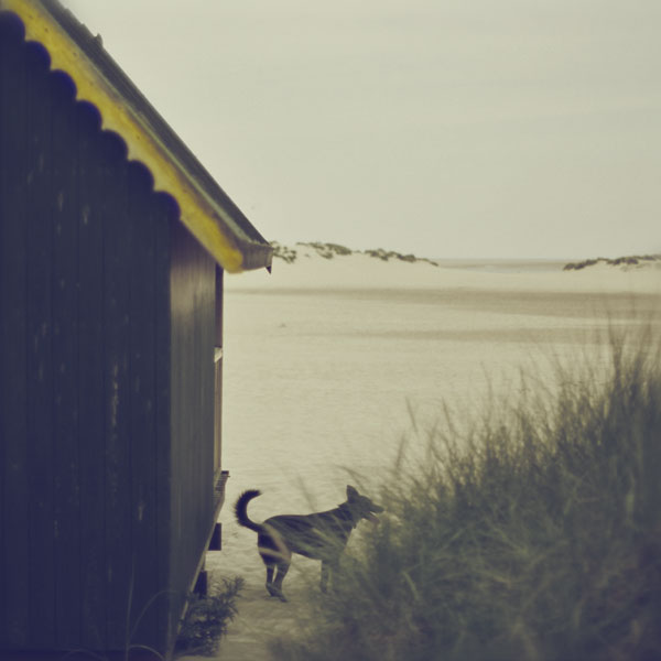 Beach Dog. Photograph by Tim Irving