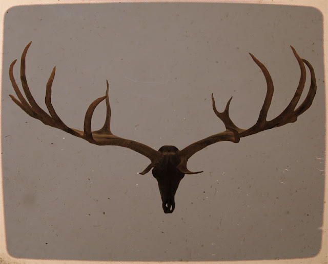Giant Deer, Skull and Antlers - Photograph by Tim Irving