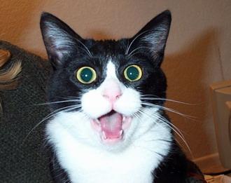 surprised-cat.jpg