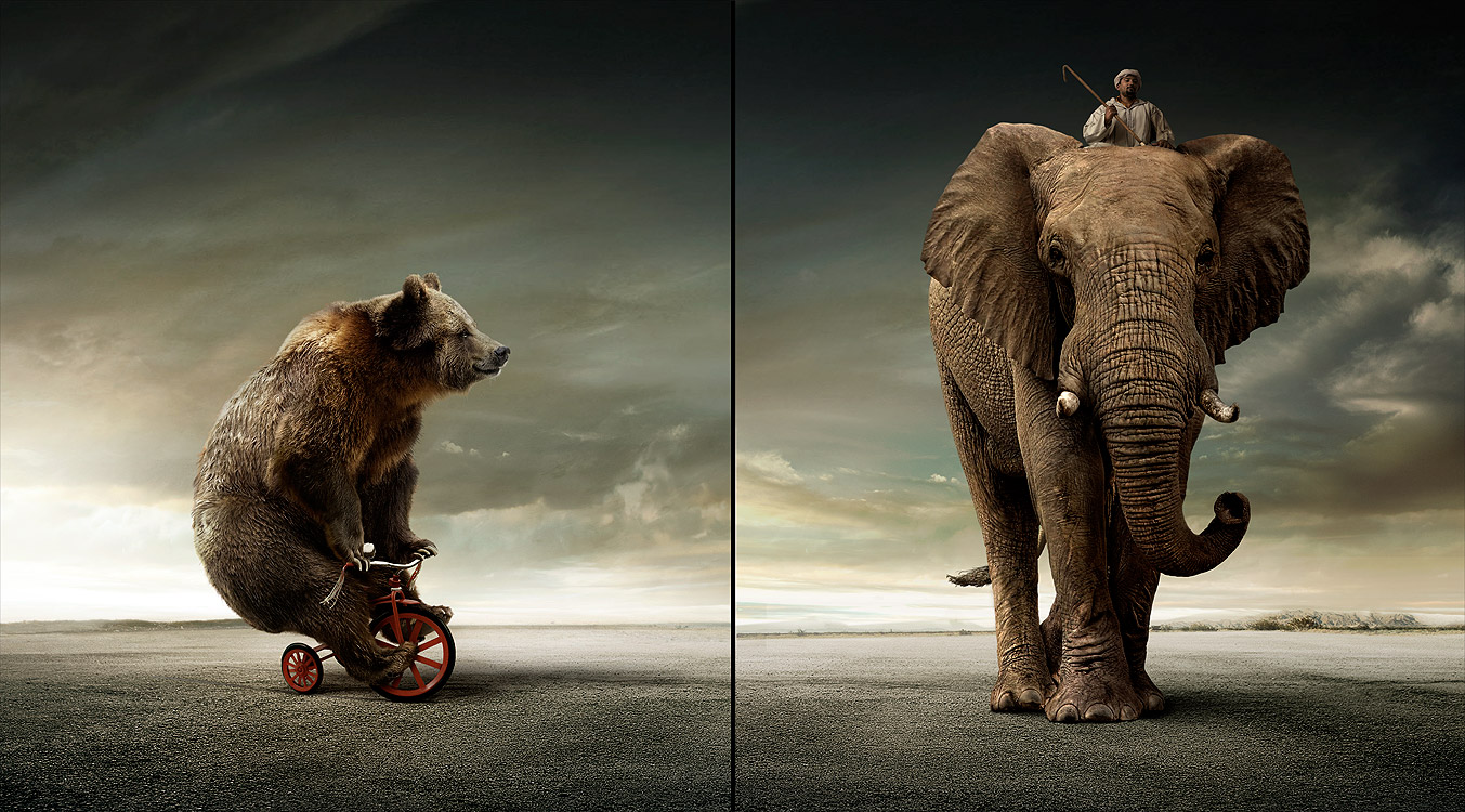 urso e elefante Publicidad con Humor y mas