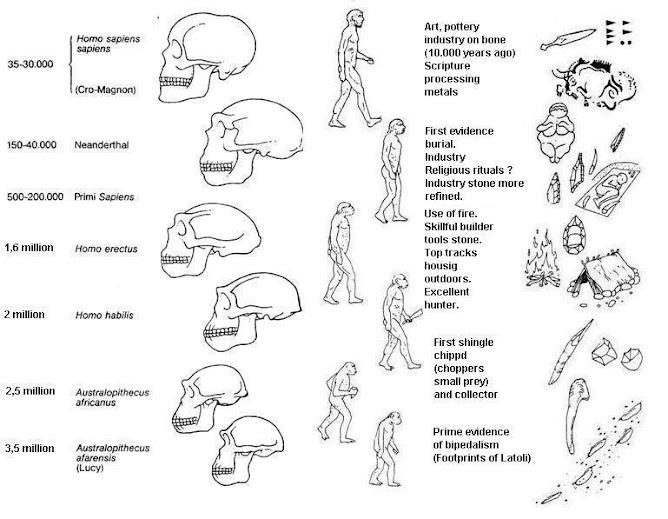 Biological evolution of the human species
