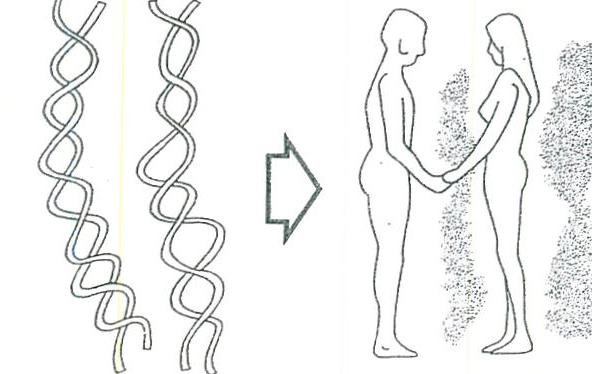 The genetic heritage of DNA: W THE SEX