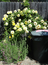I planted a garden around the trash and recycling bins and Mother Nature smiled...