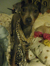 Glam Dog Mia