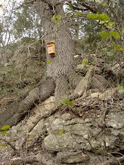 Nest Box 4