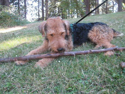 Resultado de imagen para 入れ墨 welsh terrier