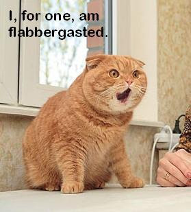 image: flabbergasted-cat
