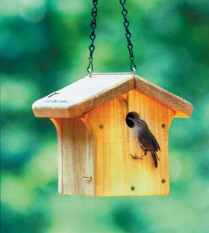 Wild birds unlimited do you need to clean out bird houses for What do i need to do to build a house