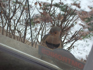 Wild birds unlimited can you help identify this backyard bird in can you help me out and tell me what kind of bird this is it was taken at my girlfriends house in jackson michigan publicscrutiny Gallery