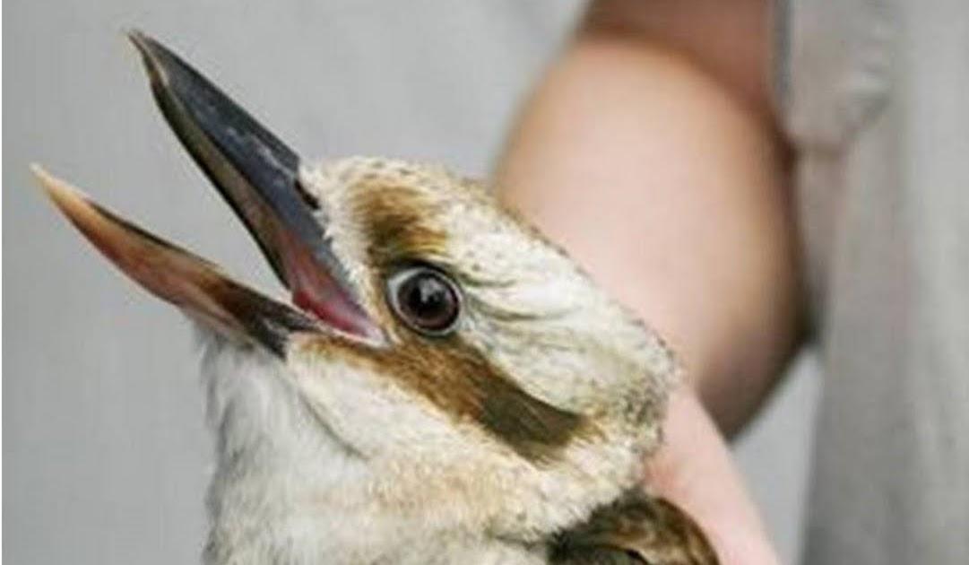 Wild Birds Unlimited Big Bird On Diet