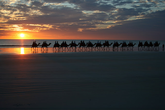 Sunset Camel Ride Cable Beach Broome Austraila - © CKoenig