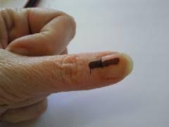 Voter's Thumb