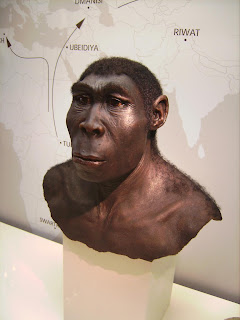 Pre-human, originating in Africa