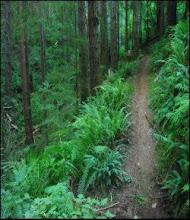 Mckenny Trail