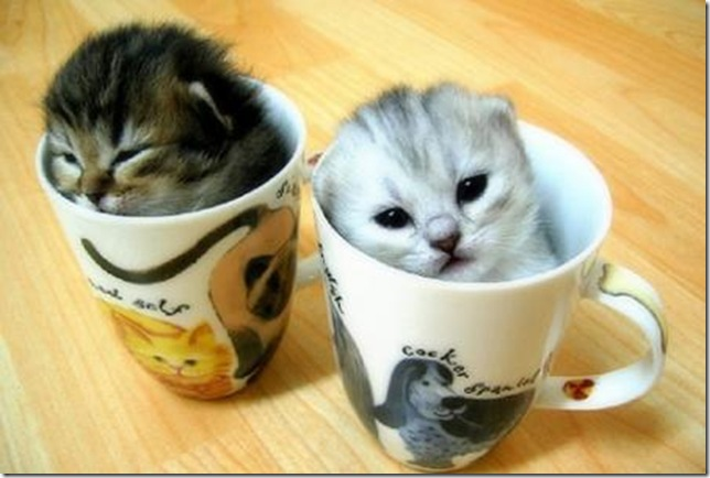 funny pictures soft kittens