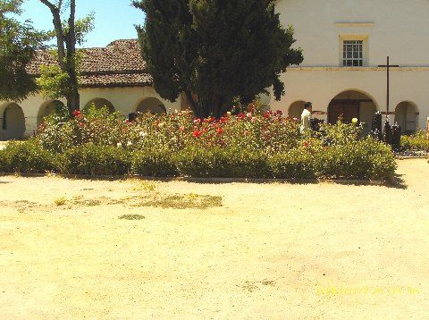 Rose Garden in mission courtyard...