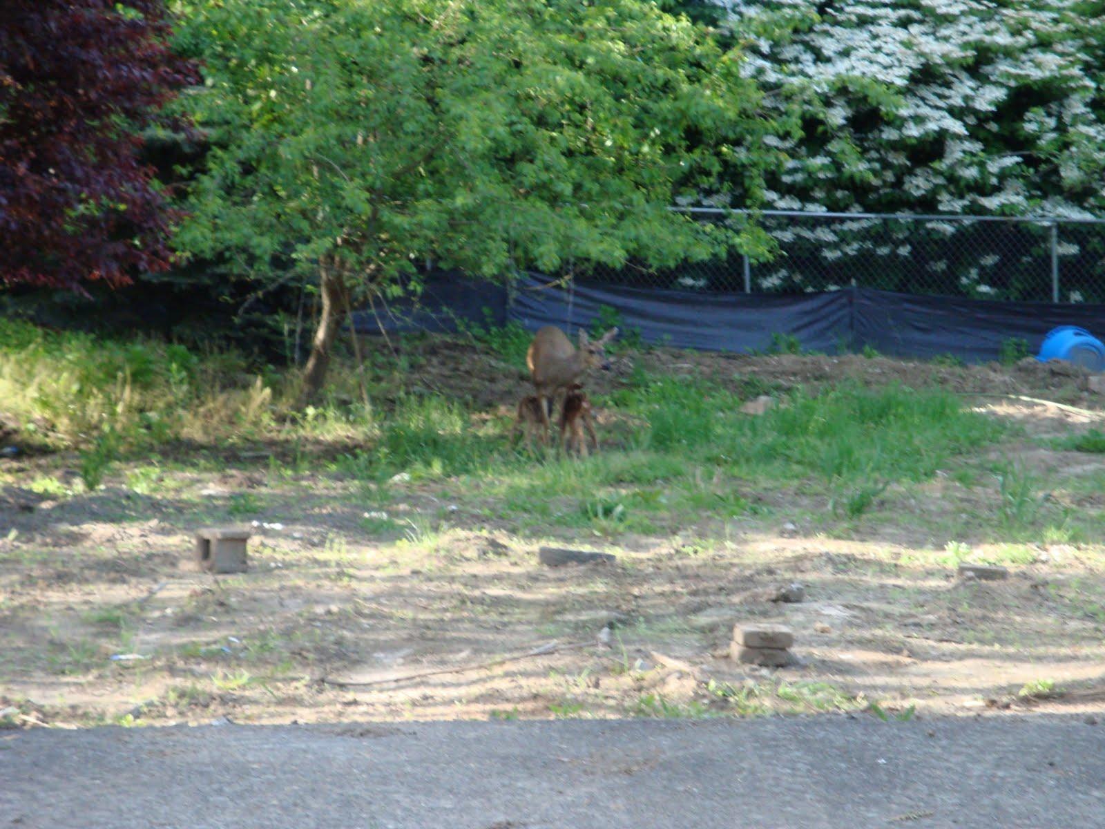 http://1.bp.blogspot.com/_oiygMLs0wko/S_Qpz-YLVEI/AAAAAAAABxo/p9SN-qgT6Gw/s1600/Portland+May+2010+(40).JPG