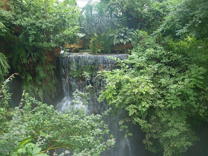 Talking Plants South China Botanical Garden Freezing