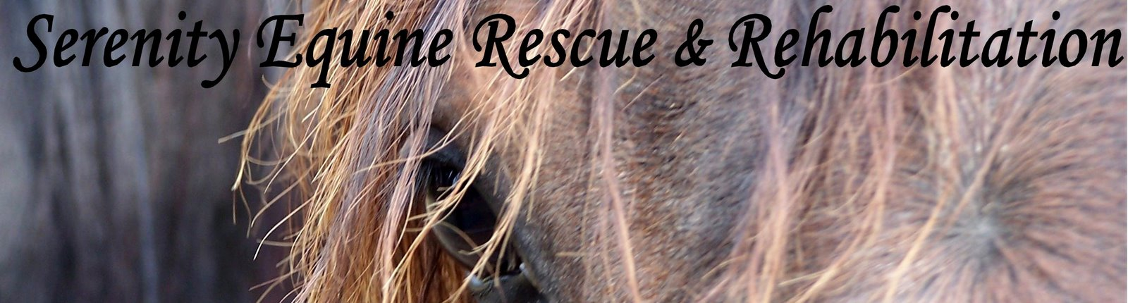 Serenity Equine Rescue and Rehabilitation