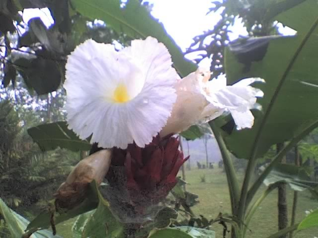 Elorodo Flowers in awesome Nature