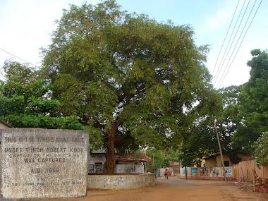 Knox Tree