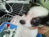 ちっぷ, MIX子犬